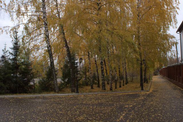 Деревья с жёлтыми листьями, красный забор