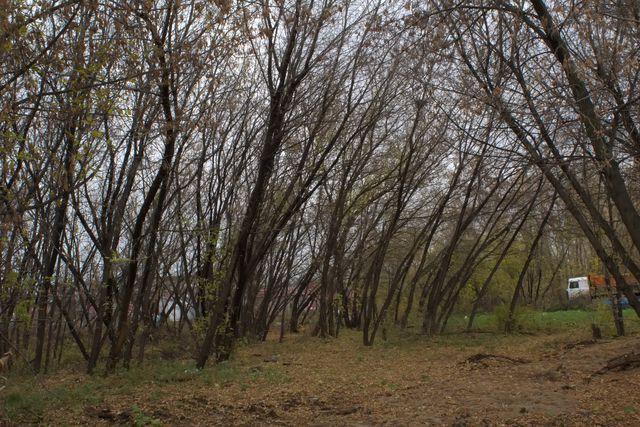 Ветви осенних деревьев