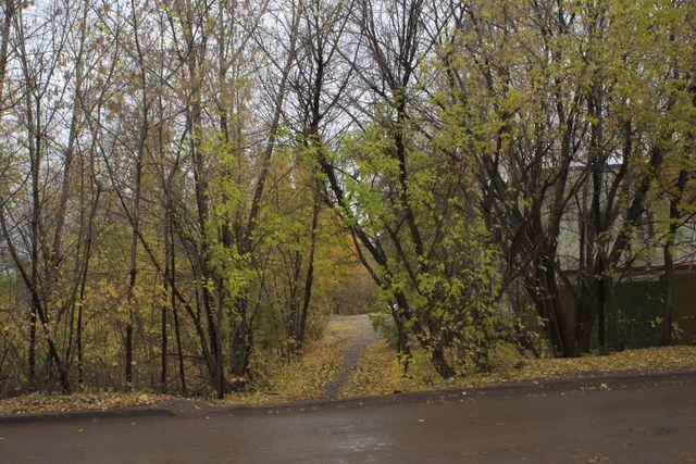 Дорога, осенние деревья