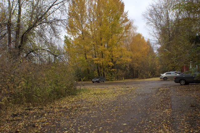 Дорога, автомобили, высокие деревья