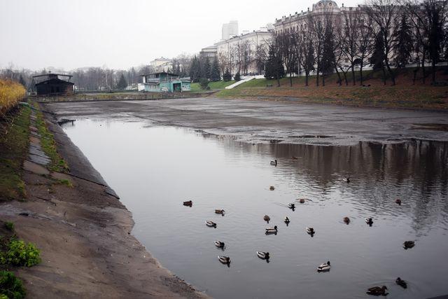 Птицы на чёрном озере