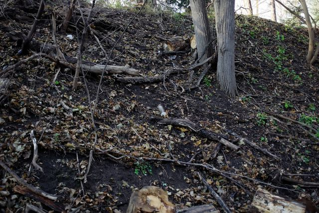Белка, пеньки ветви деревьев