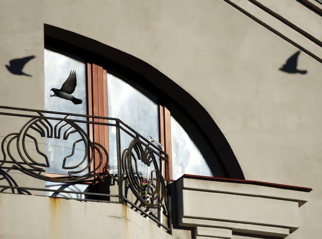 Голуби на балконе