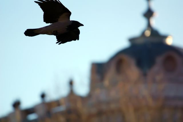 Ворон пролетает мимо здания